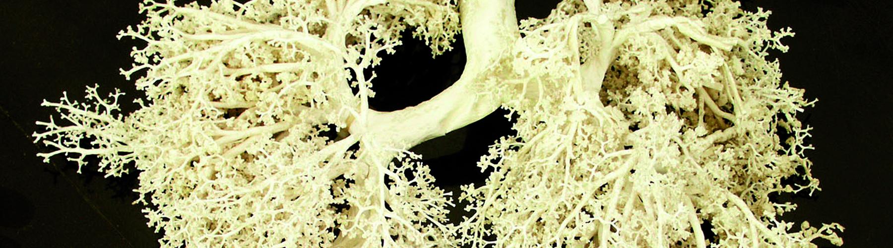 Course Image Terapéutica farmacológica de los trastornos de los aparatos respiratorio, osteomuscular y genitourinario